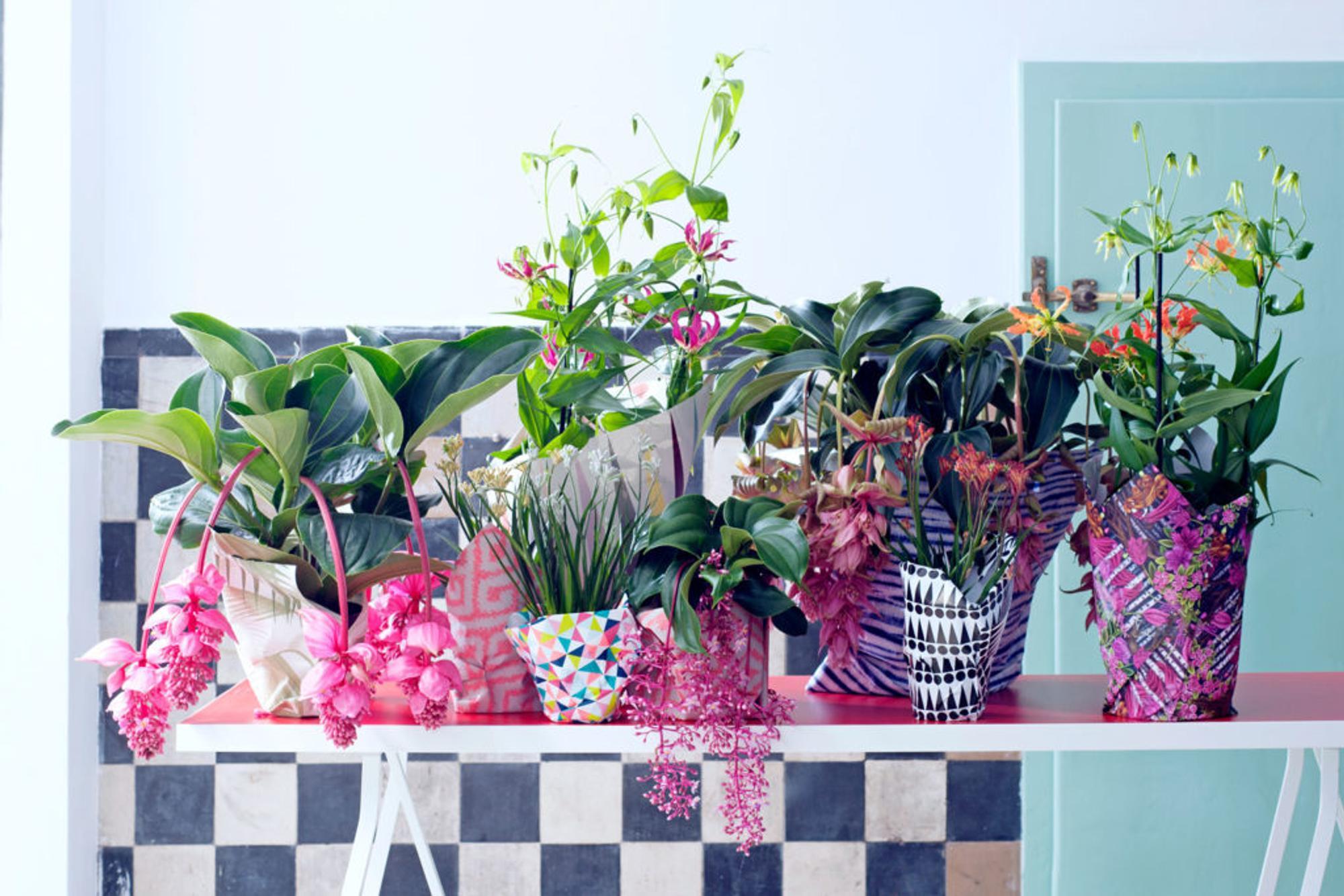 © Pflanzenfreude.de