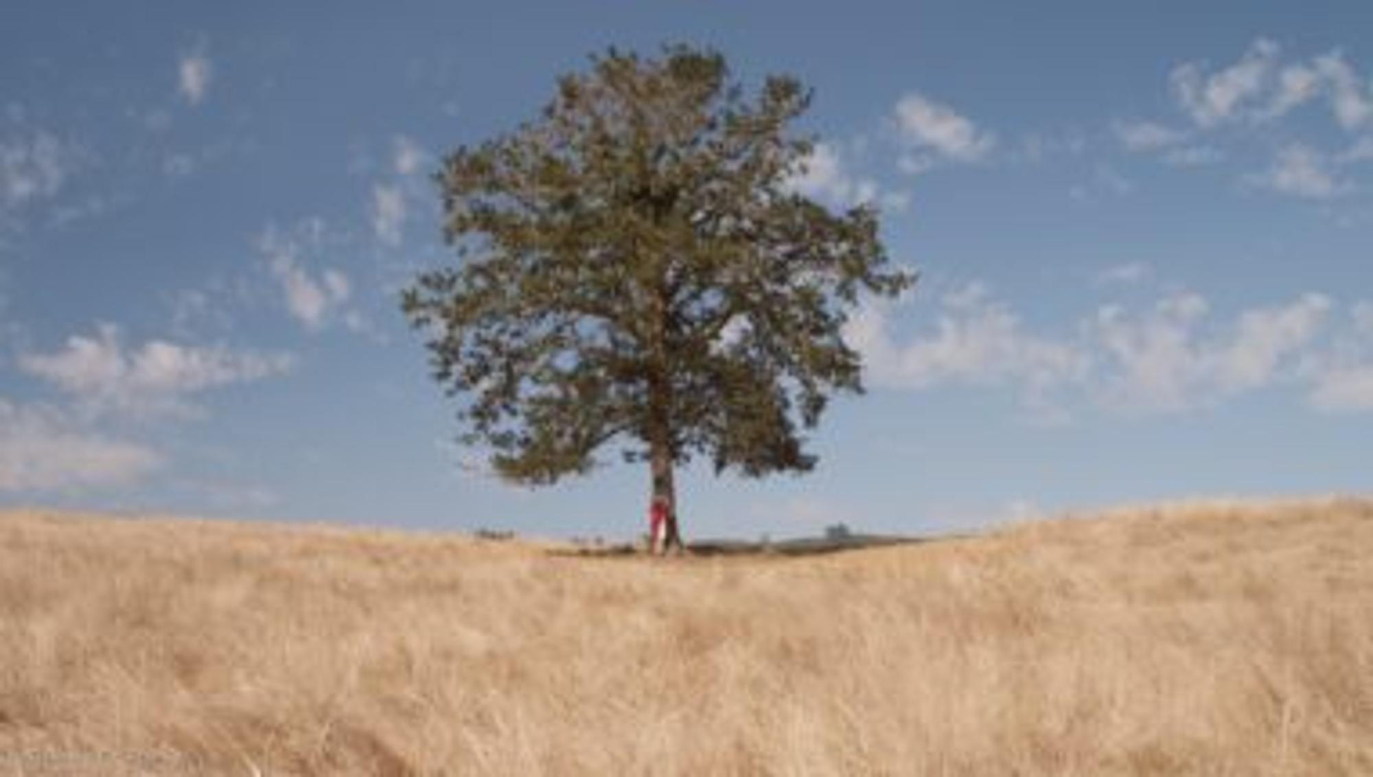Baum des Lebens inmitten eines Feldes