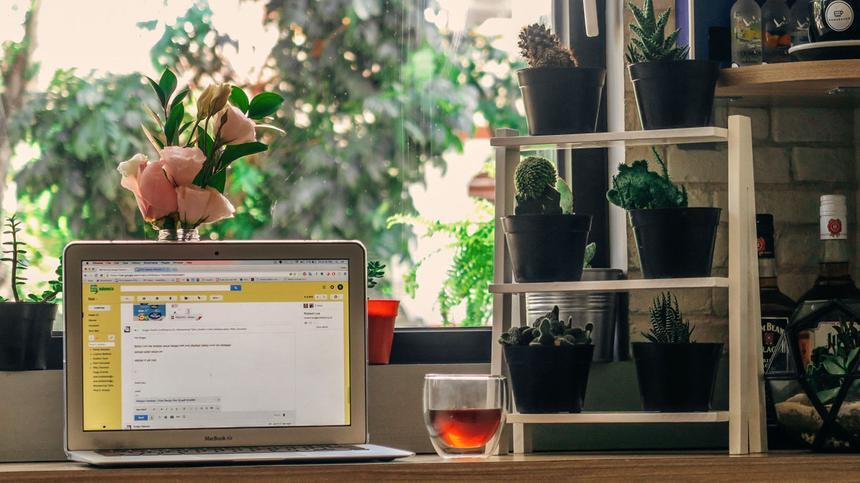 Laptop steht auf einem Schreibtisch mit Pflanzen