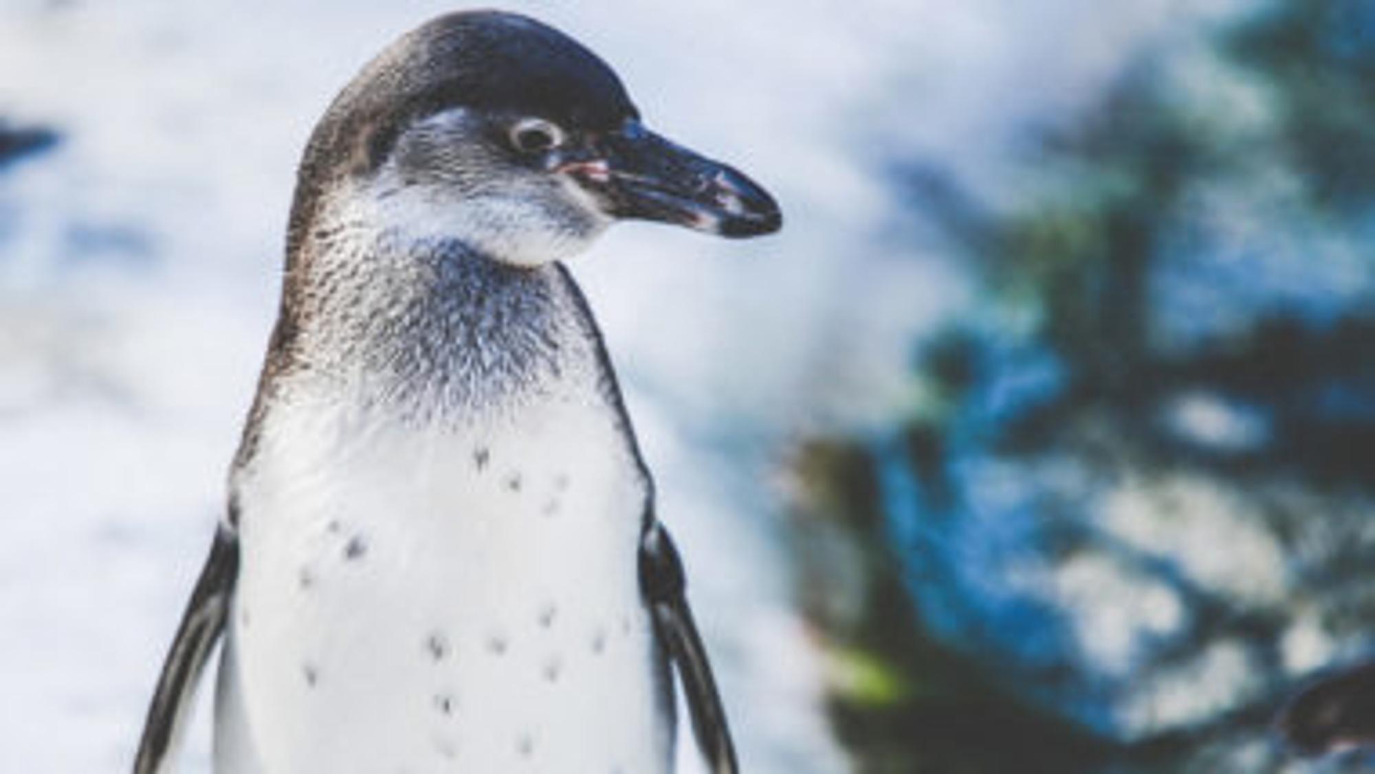 5de0f25b19 Pinguin basteln: 4 geniale Bastelideen