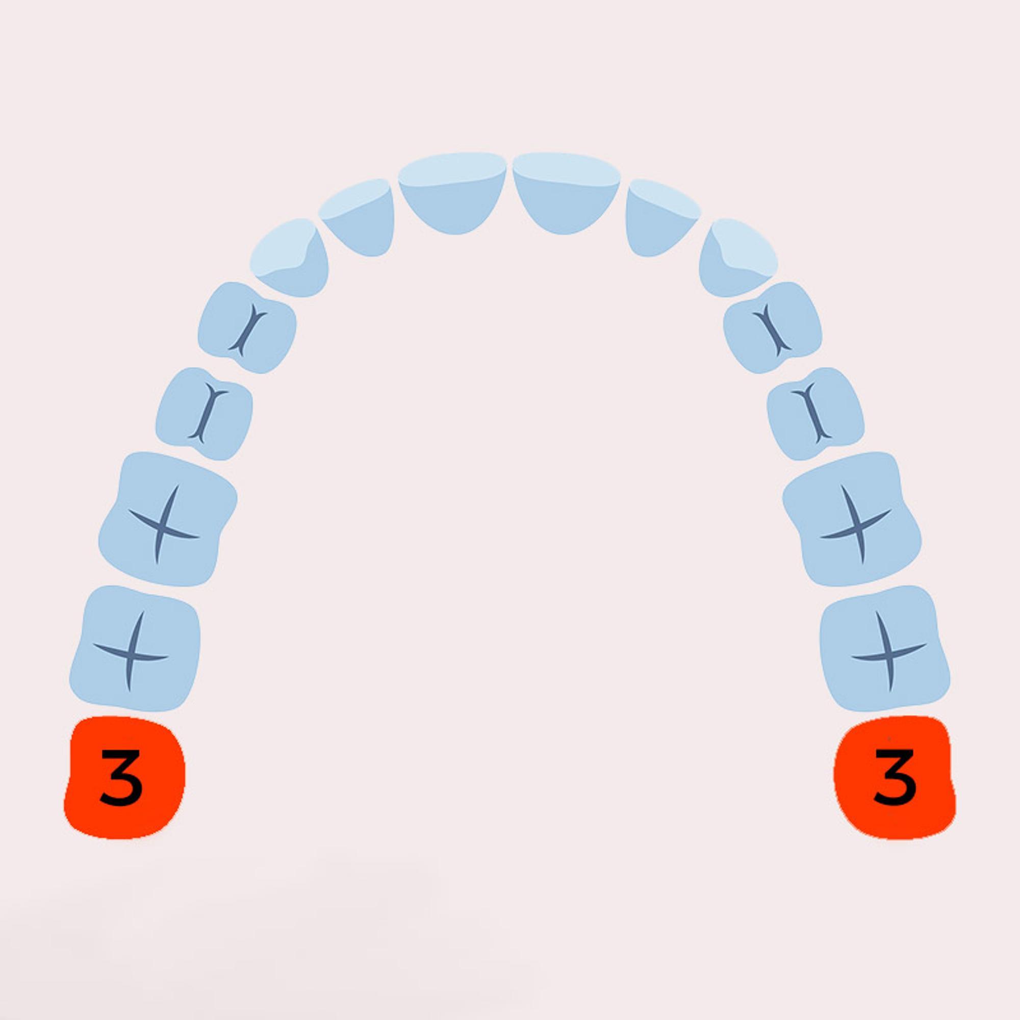 Zahnwechsel 3. Phase